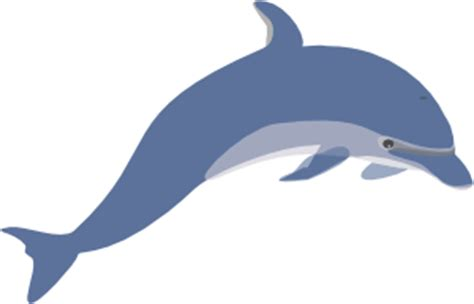Essay about bottlenose dolphins